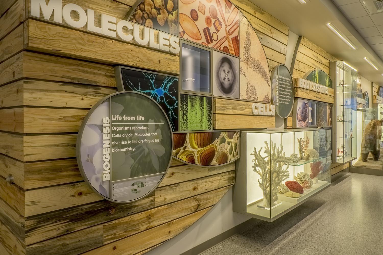 Colorado State University   Molecules Exhibit   Fort Collins, CO